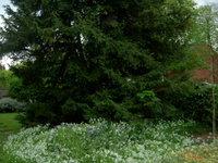 Greentree_1